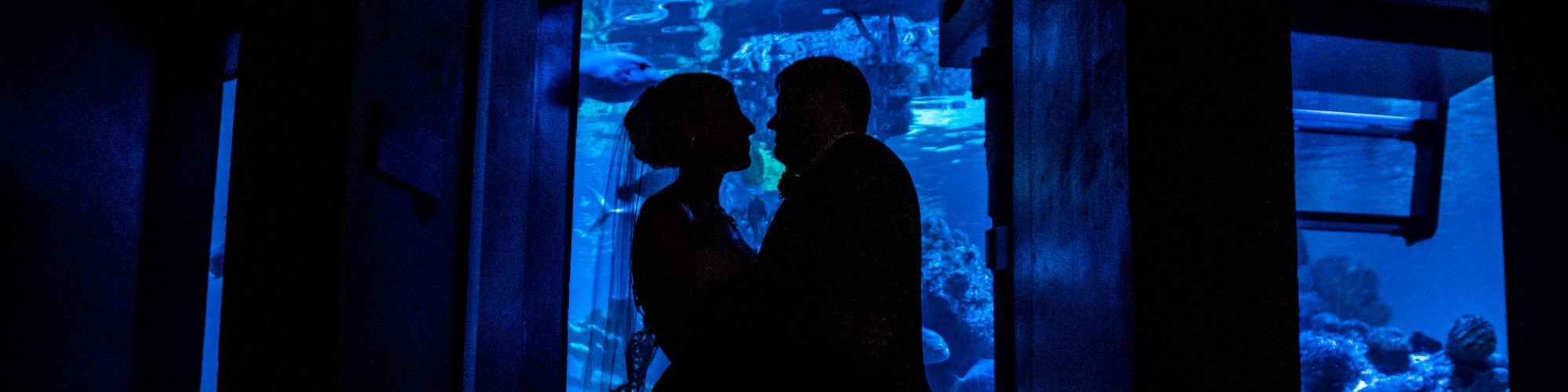 A New England Aquarium Wedding Chrissy Brian